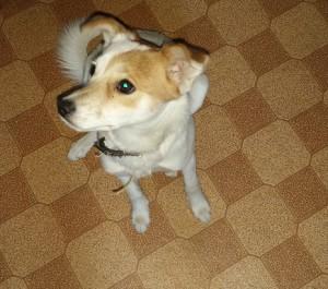 Собаке Лаки 6 месяцев