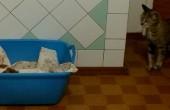 приютили бездомную собаку