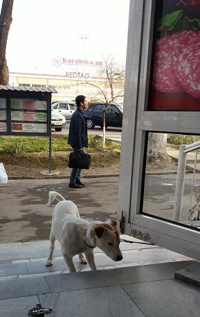 Собака Лаки и сосиска