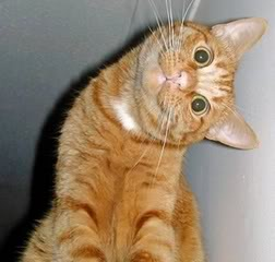 кошка склонила голову на бок