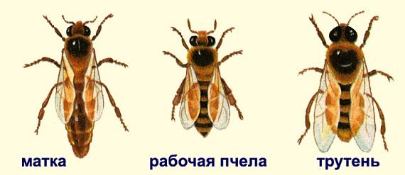 taynaya-jizn-pchel-3
