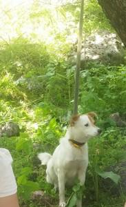 собаку привязали к дереву на природе