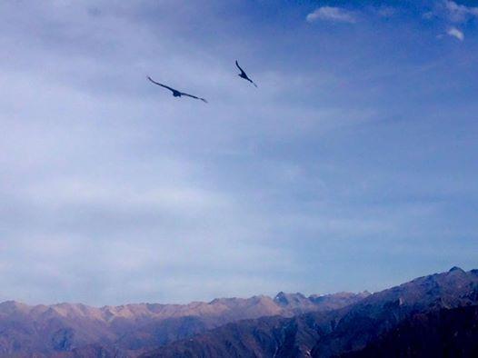 полет кондора